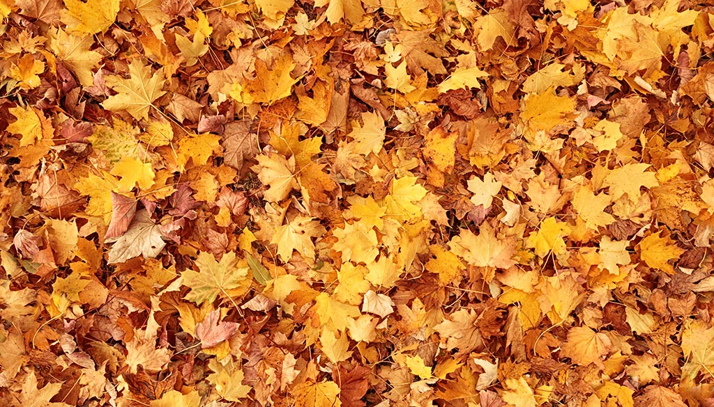 njmel-leaves