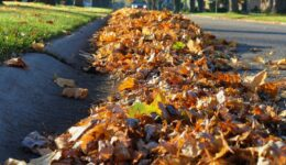 Heap of leaves along the street curb.